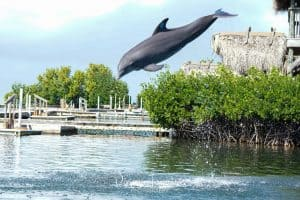 Dolphin Research Center in Marathon Florida