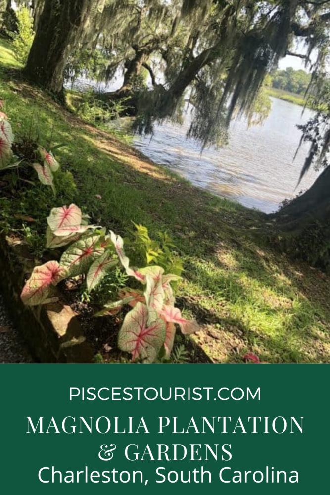 Plan a trip to Magnolia Plantation & Gardens