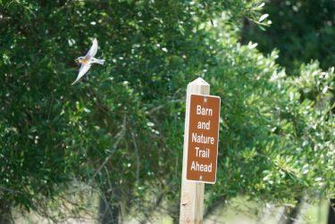 Eastern BlueBird at Widgeon Point Preserve