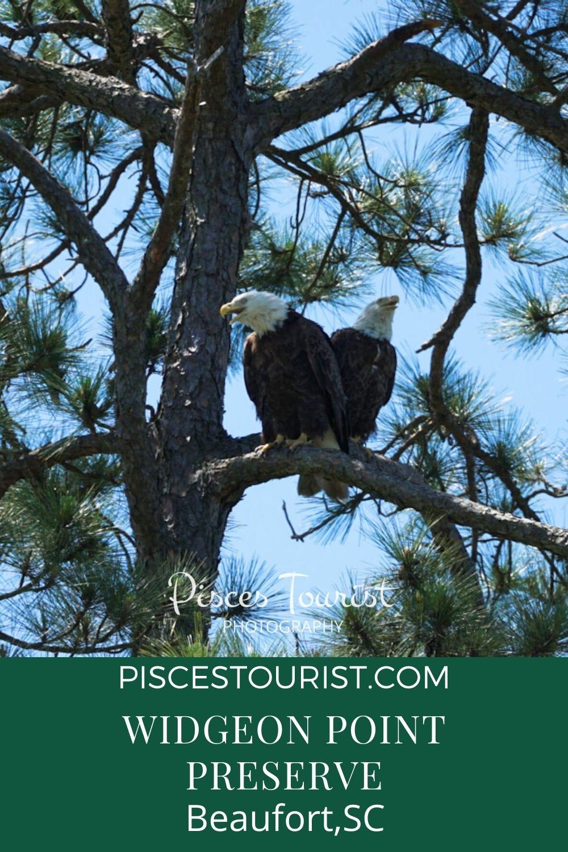 Widgeon+Point+Preserve+Bald+Eagles